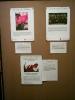 Tolkienausstellung in Ffm :: literaturkreis_unterwegs_2006_tolkienausstellung_in_ffm_hoechst_005
